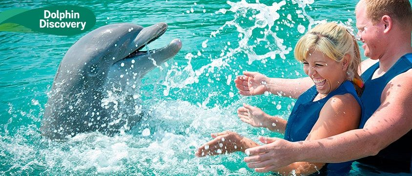 Dolphin+Discovery