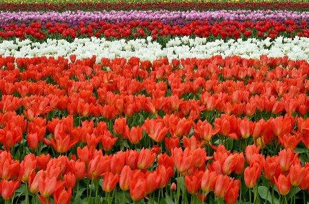 Flowers farming