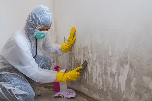 mold remediation service near me