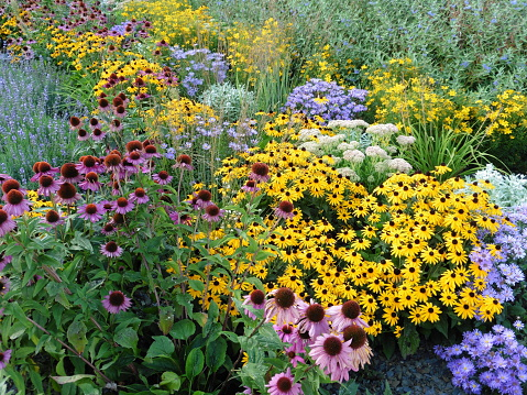 perennial flowers for sale