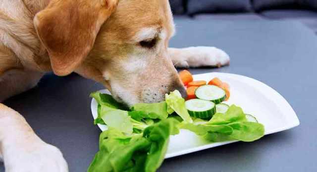 feeding your dog